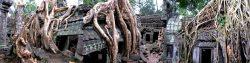 Temple de Ta Prohm Ultra Trail d'Angkor