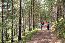 Marche nordique en Finlande